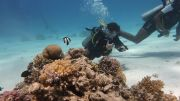 diving-285539640